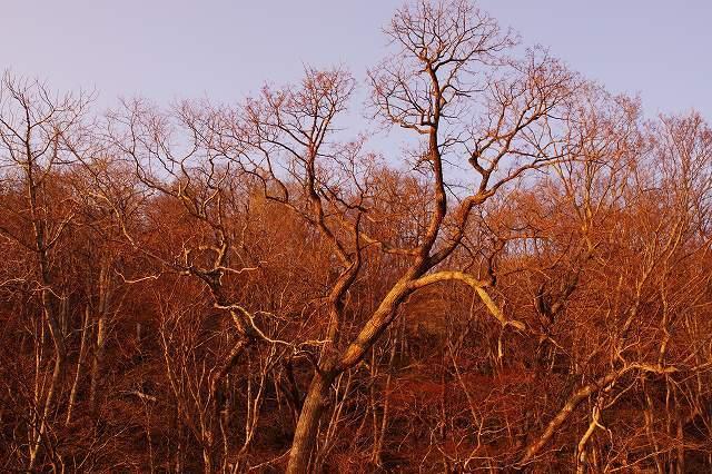 2012年4月14日支笏湖の夕景4.jpg